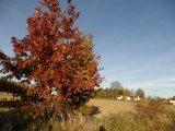 Malíř podzim